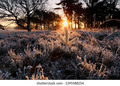 winter sunrise over little frosted pine tree