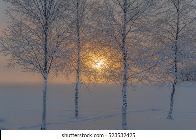 Winter sunrise seen through the trunks and branches of four birches in front of snow-covered lake, Sweden
