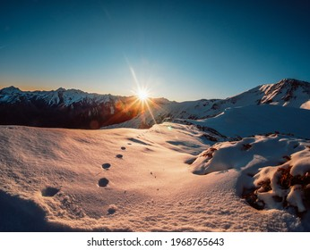 Winter sunrise in snow, with animals print