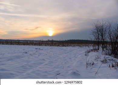 winter sunset over a dry corn field