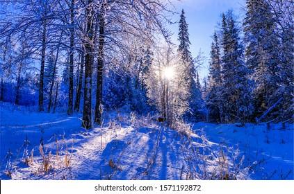 Winter sunset in snowy forest landscape