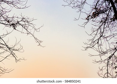 Winter sunset trees. Winter sunset nature landscape. copy space