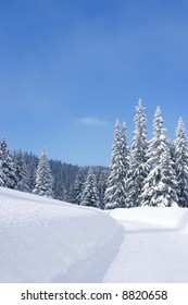 Winter time: snow forests in the mountain Travnik - Vlasic