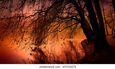 winter tree branches reflected on lake surface at sunset