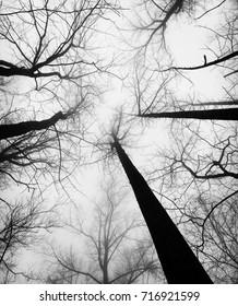 Winter Tree Canopy