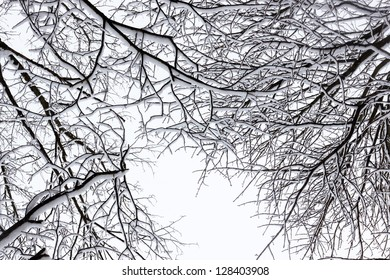 Winter tree conceptual black and white photo