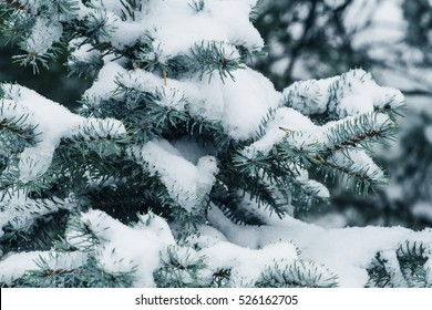 Winter tree covered with snow as background. Close up