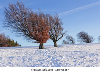 Winter tree in evening light