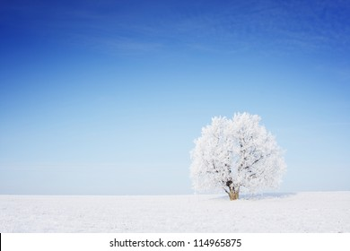 Winter tree in a field with blue sky