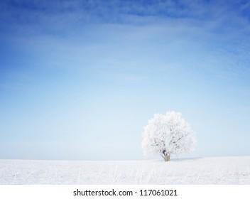 Winter tree in a field with blue sky