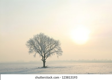 Winter tree in a field on a sunny cloudless morning.