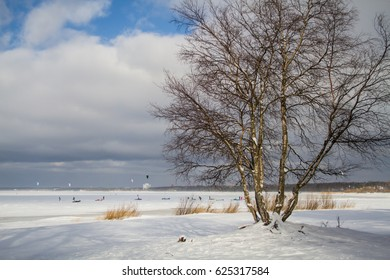 Winter. Tree growing on the coast of the Gulf of Finland