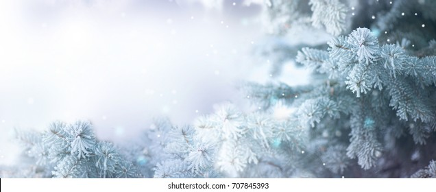 Winter Tree Holiday Snow Background. Snowflakes. Blue spruce, Beautiful Christmas and New Year Xmas tree border art design, abstract Blue Backdrop with snow