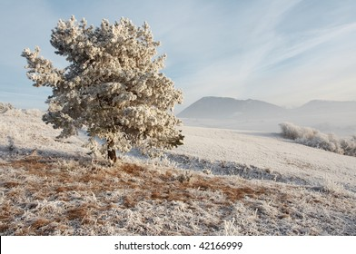 winter and tree II.