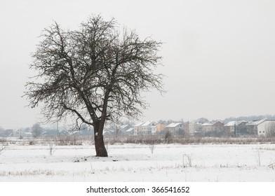 winter tree pear is background sky