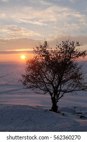 winter tree and sunset