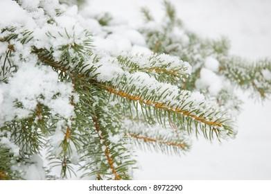 winter tree twig in snow