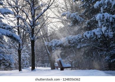 Winter trees in Alberta Canada