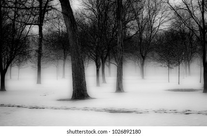 Winter trees in Clawson Park, Micigan