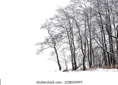 Winter trees isolated on white background