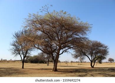 Winter trees on a farmland