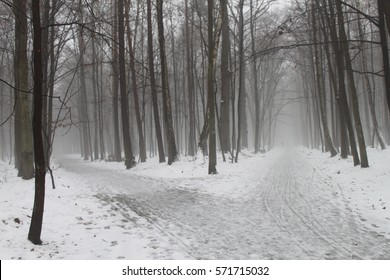Winter trees in Poland