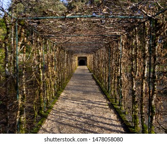Winter view of an arbor forming a long tunnel found on the grounds of the Ashford Castle gardens