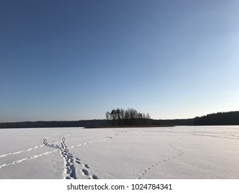 Winter view, forest, snow, no people, lake