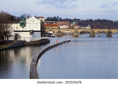 Winter view of Vltava River near Charles Bridge in Prague with breakwater crowded with seagulls