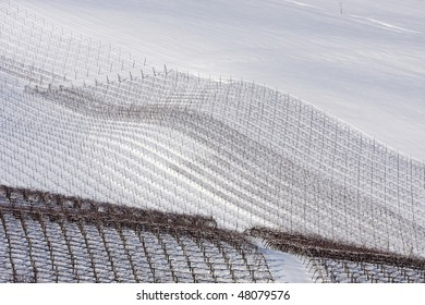 Winter vineyards in Oltrepo Pavese, Italy.