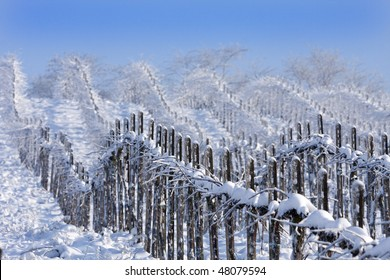Winter vineyards, Oltrepo Pavese, Lombardy, Italy.