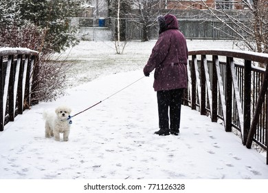 Winter walk with a dog pet.  Senior adult stretching the legs accompanied by her cute poodle pet