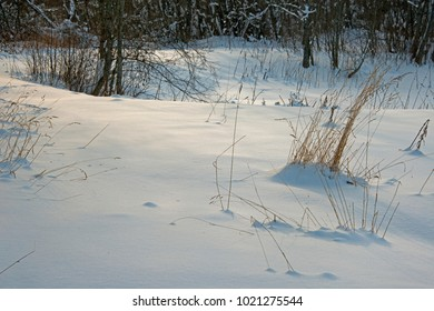 Winter walk - the snow-covered field with blades