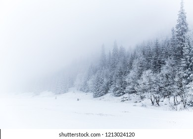 Winter white forest panorama with snow in Tatra Mountains, Christmas background. Panoramic beautiful winter inspirational landscape view.