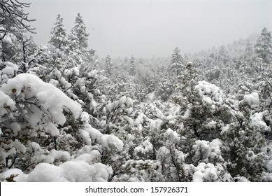 A winter wonder land in Tonto National Forest, AZ/ New fallen snow/The roads are closed along with schools so here is the opportunity to take a walk in the forest and enjoy the fresh snow.