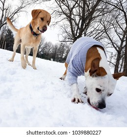 Winter wonderland. Dogs playing at snow