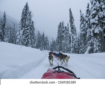 Winter wonderland dogsledding in the Canadian Rockies