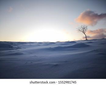 Winter wonderland Finnland, frosty landscape
