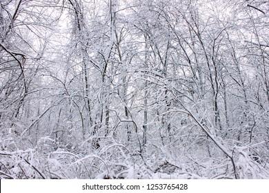 Winter wonderland at Rock Cut State Park in Illinois