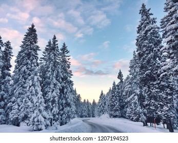 Winter wonderland, a lot of snow in the forest