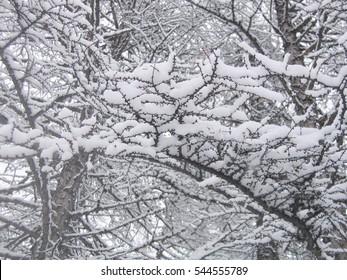 Winter wood at the city of Magadan, Russia.