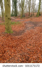 Winter woodland with leaves