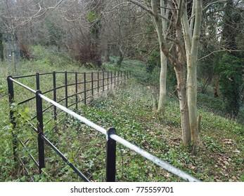 Winter woodland pathway