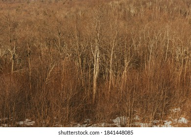 Winter woods in the Blue Ridge Mountains