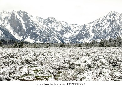 Winter in Wyoming spring: Snowy sagebrush and pine forest in valley near rocky mountains in Grand Grand Teton National Park in mid May, for themes of weather, nature, and the American West