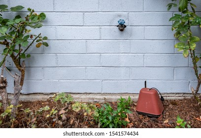 Winterization, outside faucet on a blue gray painted brick wall, garden bed with rose plants, foam and plastic faucet cover to prevent pipes freezing