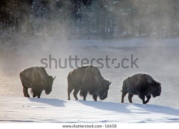 Winters March Yellowstone