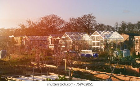 A winters sunset over an Allotment with empty raised beds with greenhouses, glasshouses in the background.