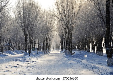 Winter's tale with snow and frost.