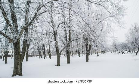 Winter's Tale. The winter creek in snowy forest